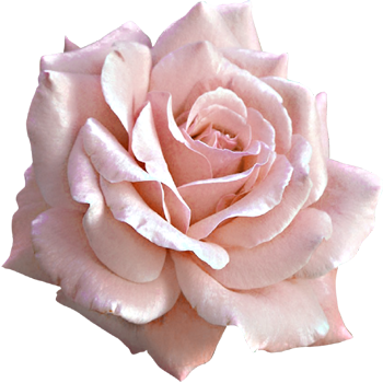 MP Rose Society